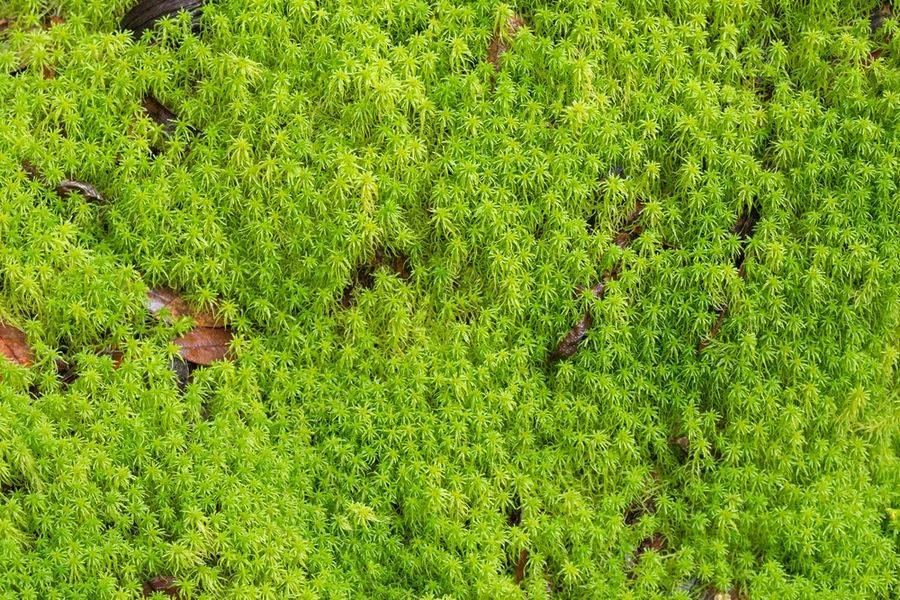 Значение мхов в природе и жизни человека