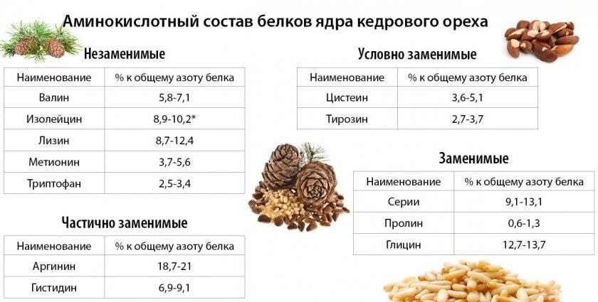 Кедровые орехи: польза, вред, калорийность, применение
