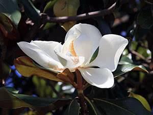 Какой уход требуется пионам после цветения: необходимые процедуры и рекомендации по их проведению