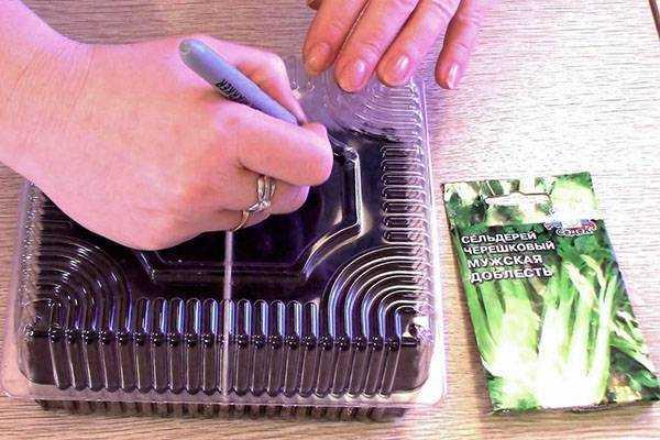 Выращивание сельдерея черешкового рассадой