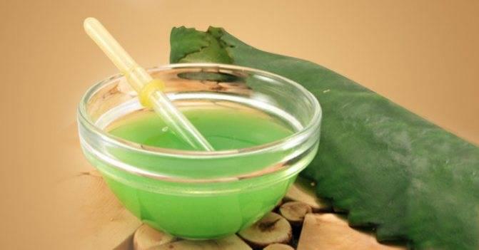 Изготовление в домашних условиях и инструкция по применению сока каланхоэ