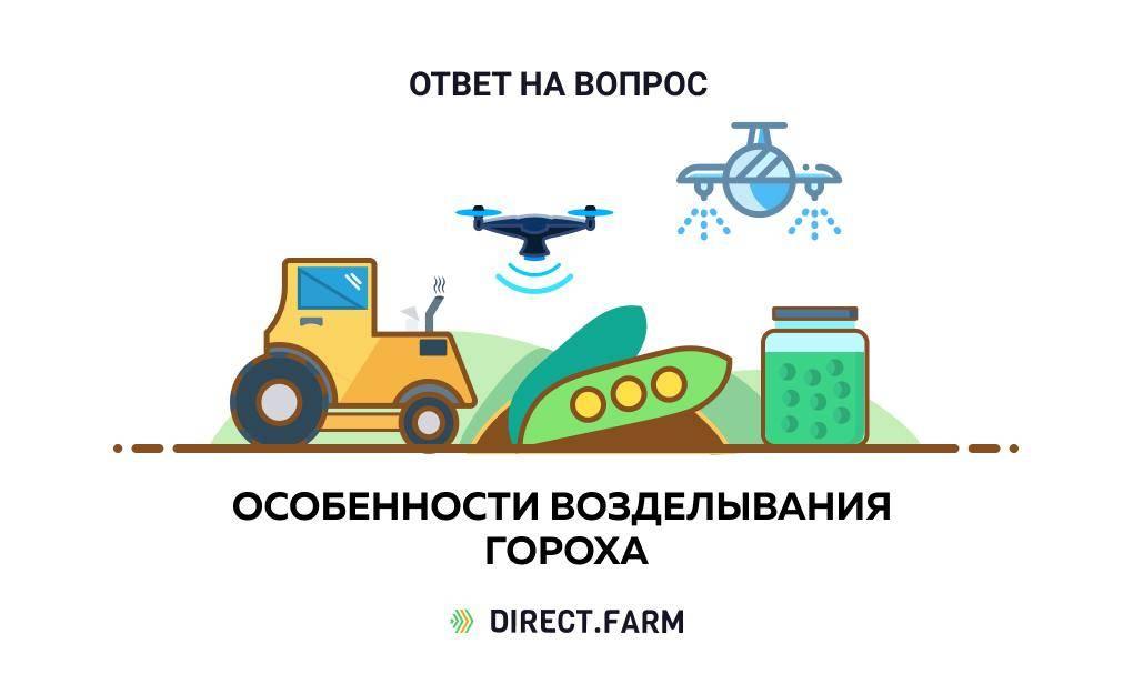 Технология выращивания гречихи, особенности посева, ухода и сбора урожая