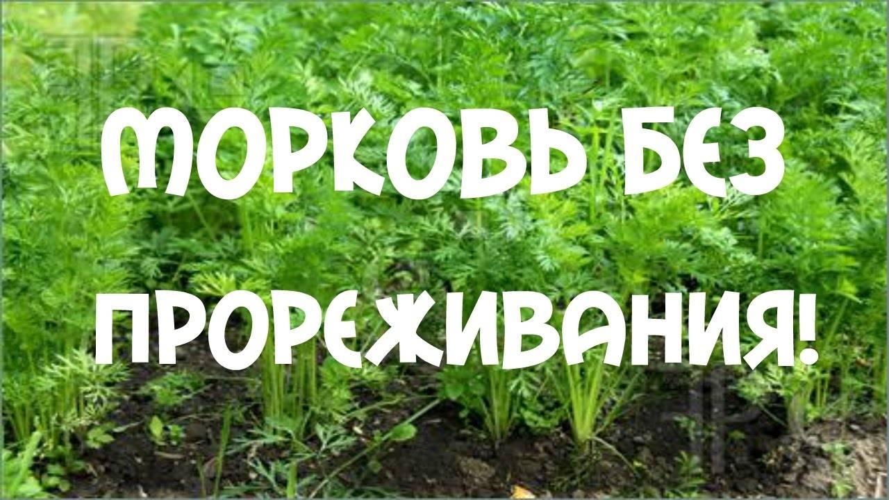Как посадить морковь чтобы не прореживать
