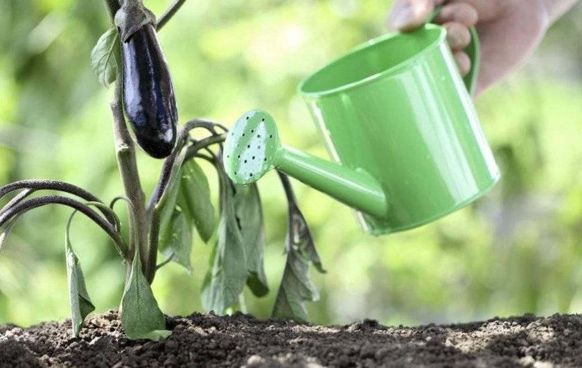 Чем подкормить рассаду баклажан желтеют листья