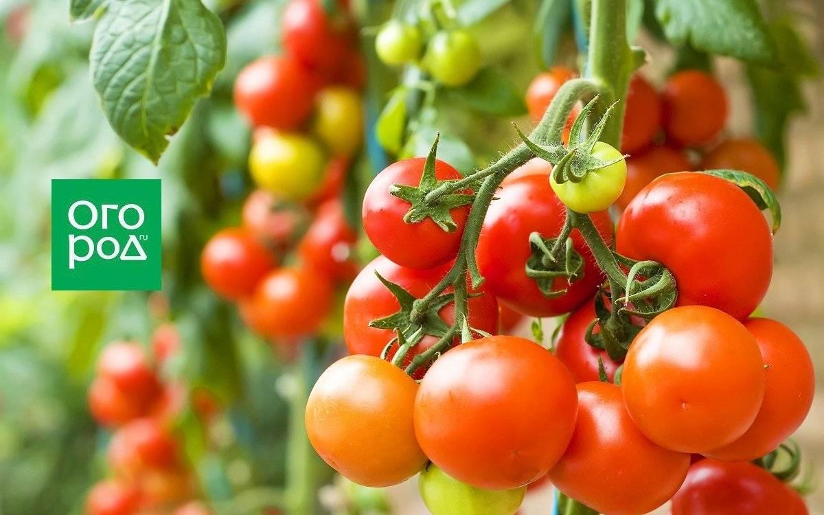 «калимаг» как удобрение: применение в огороде, состав, свойства, инструкция