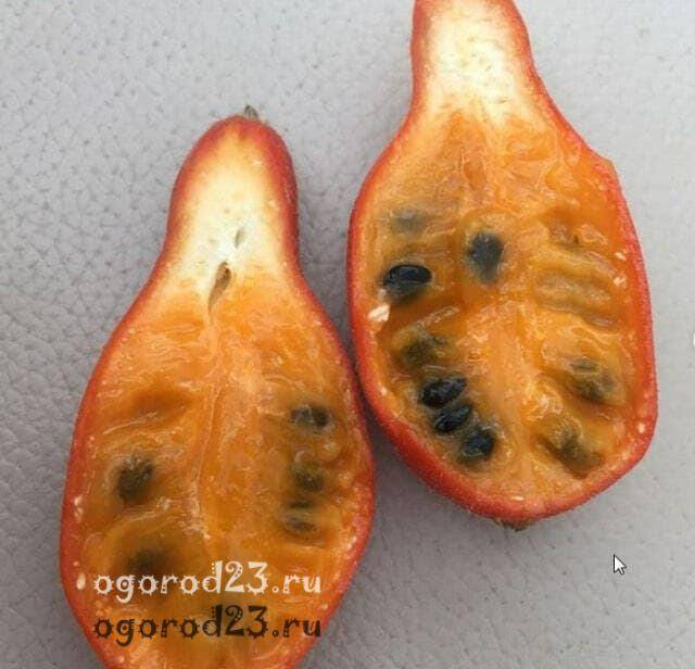Тладианта или красный огурец, фото, выращивание, лекарственные свойства