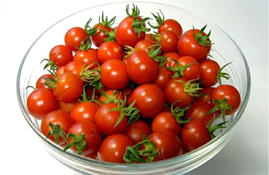 Помидоры на подоконнике зимой: лучшие сорта и порядок выращивания томатов в домашних условиях