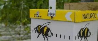 Зная медоносные травы для пчел, можно стабильно получать хороший взяток
