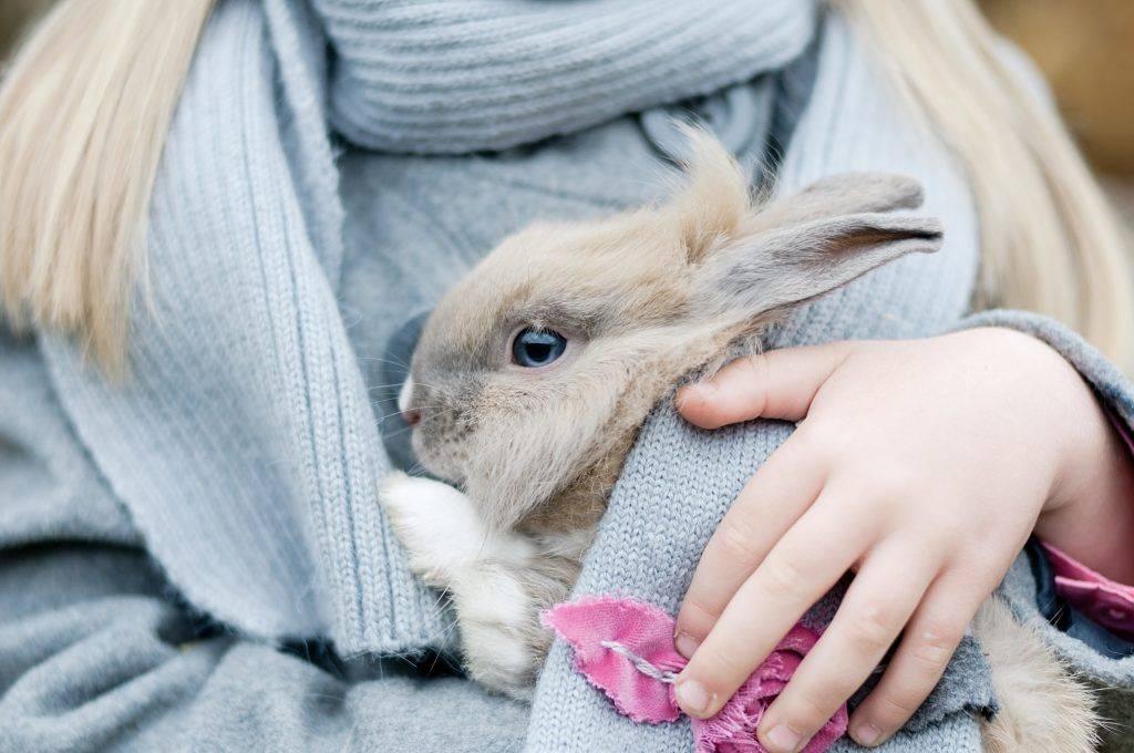 Как использовать препарат соликокс для кроликов: инструкция по применению