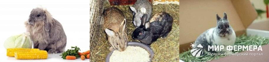 Декабрь на хозяйственном дворе — уход за курами, кроликами, проверка пасеки, видео