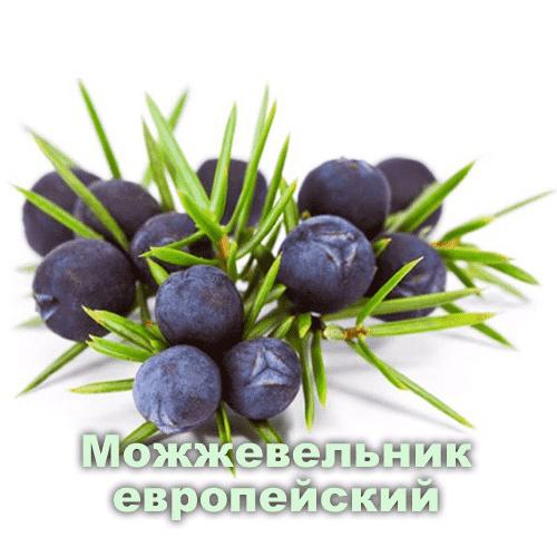 Можжевеловое эфирное масло: польза и способы применения