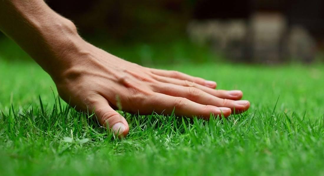 Фертика газонное весна-лето — отзывы, описание