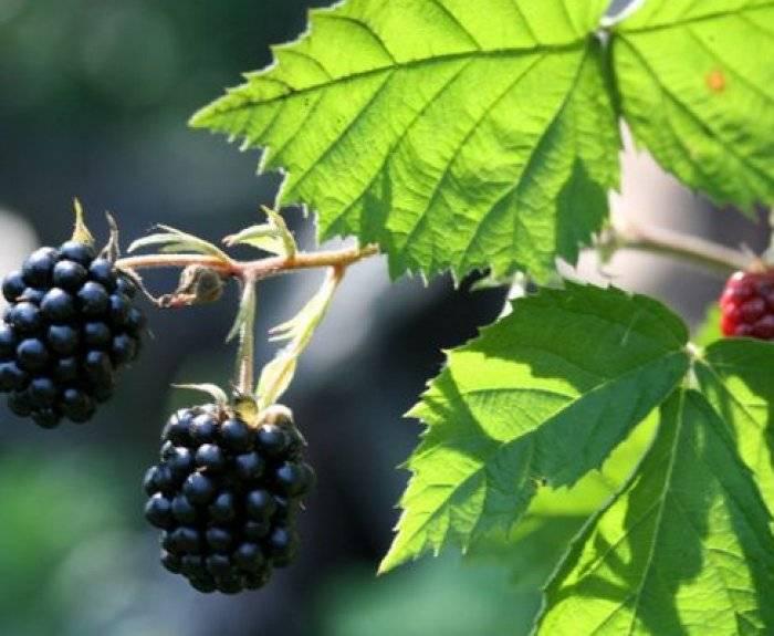 9 самых неприхотливых плодовых культур