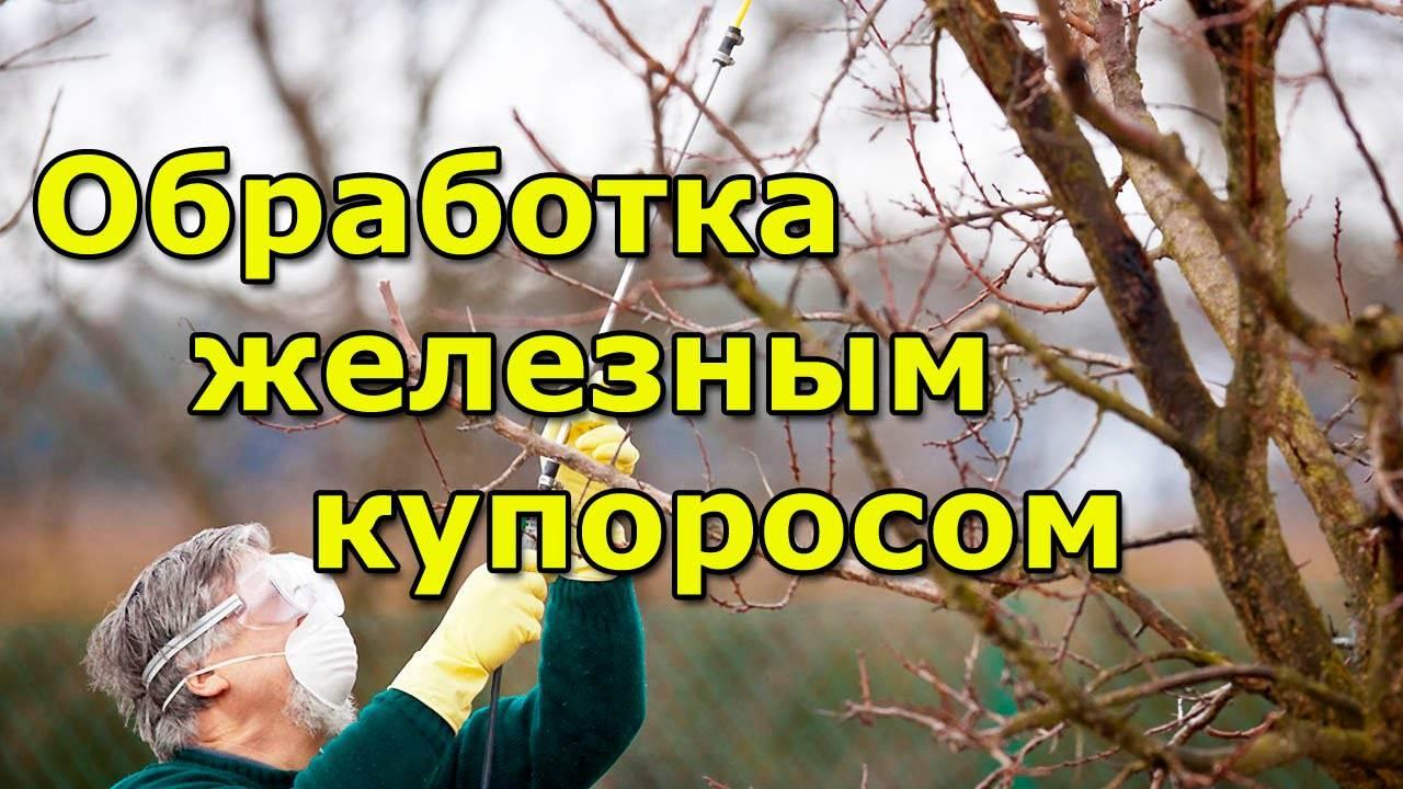Железный купорос: применение в садоводстве, преимущества и недостатки