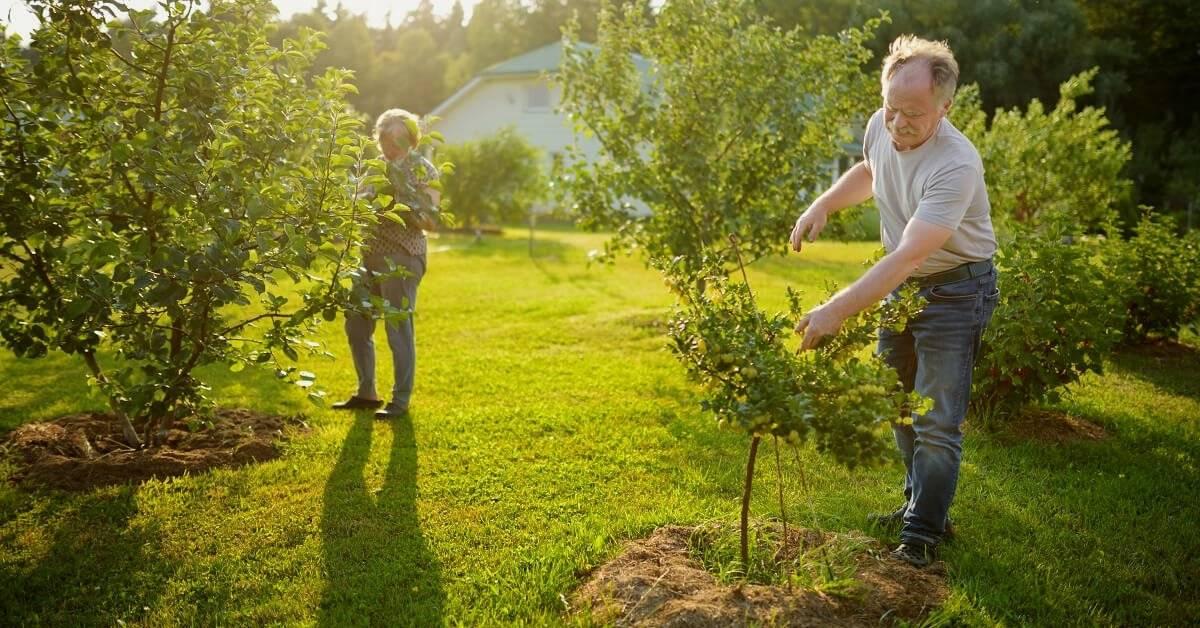 Чем подкормить плодовые деревья в августе