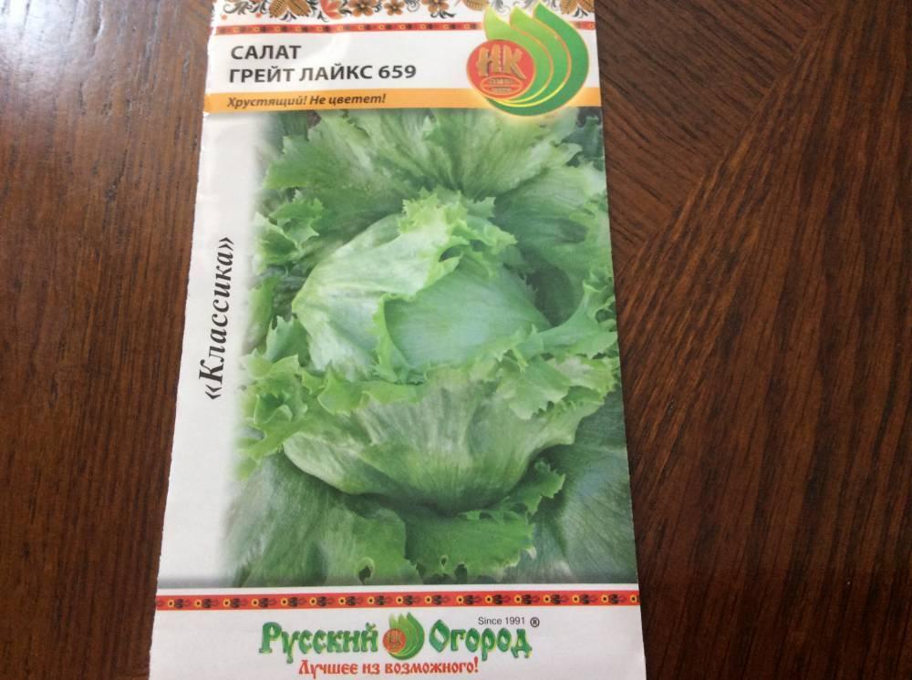 Выращивание салата в открытом грунте и домашних условиях