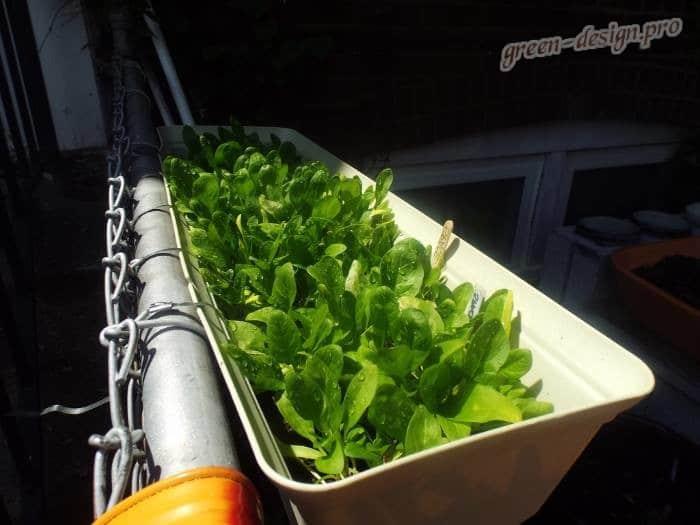 Шпинат – как употреблять в пищу