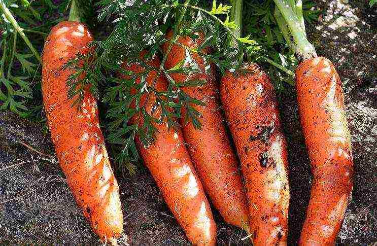 Благоприятные дни для посадки моркови в грядки в апреле 2020 года по луне
