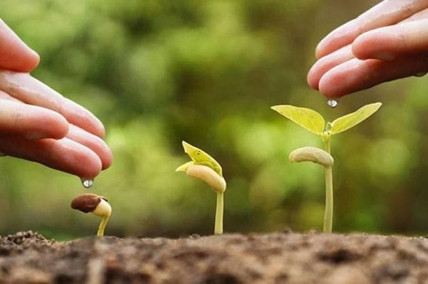 Как самостоятельно приготовить стимуляторы роста для растений