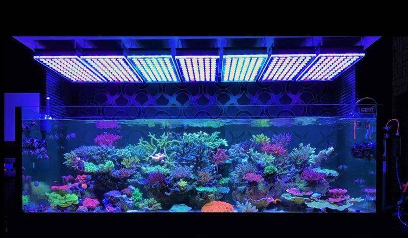 Как выбрать и установить светодиодную ленту для освещения аквариума
