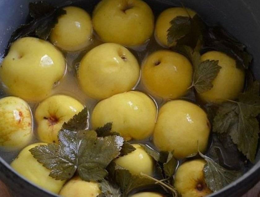 Вкусные моченые яблоки в домашних условиях – простые рецепты для каждого