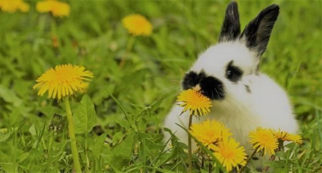 Можно ли давать кроликам хвощ полевой