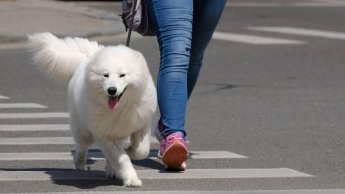 Как сделать вольер для собаки своими руками — схема + фото
