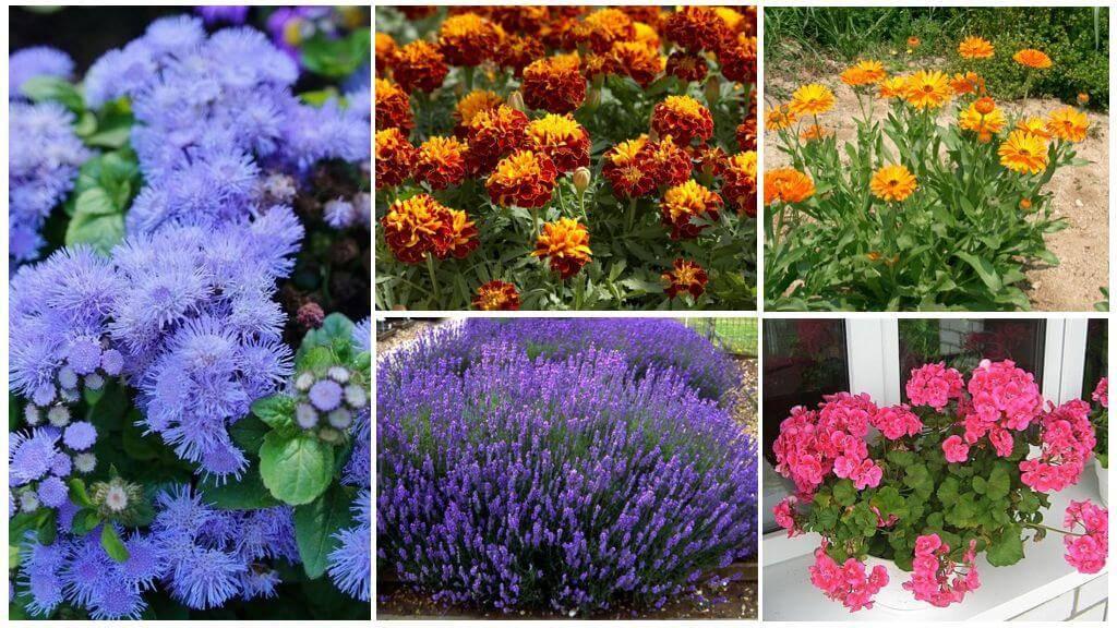 Какие растения помогают бороться с вредителями сада и огорода