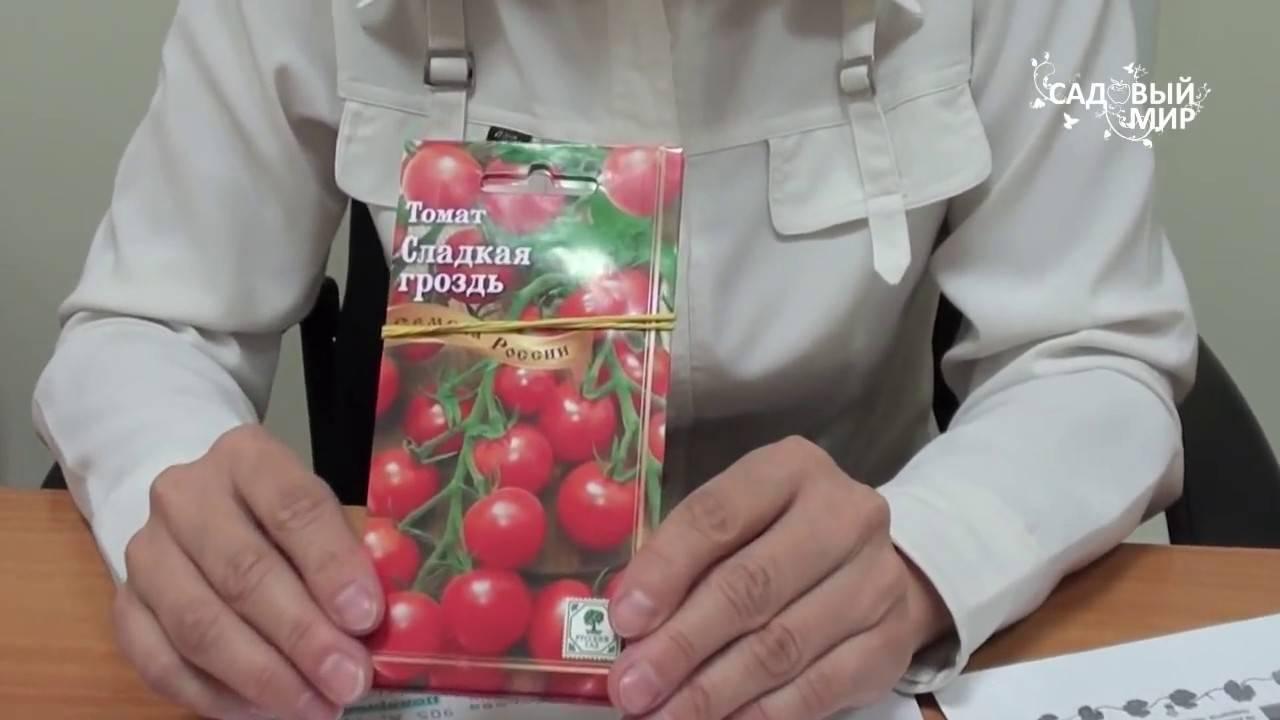 Существуют ли помидоры, которые не болеют фитофторой?