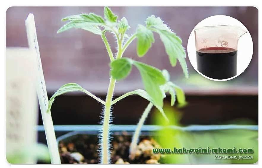 Торф как удобрение для картофеля и помидор