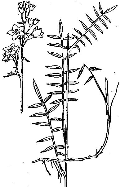 Растение в прибрежной зоне водоема — камыш: фото, польза для человека