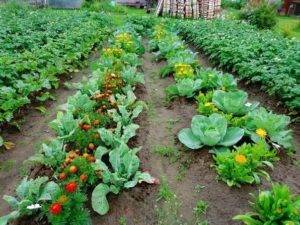 Что посадить на огороде — список