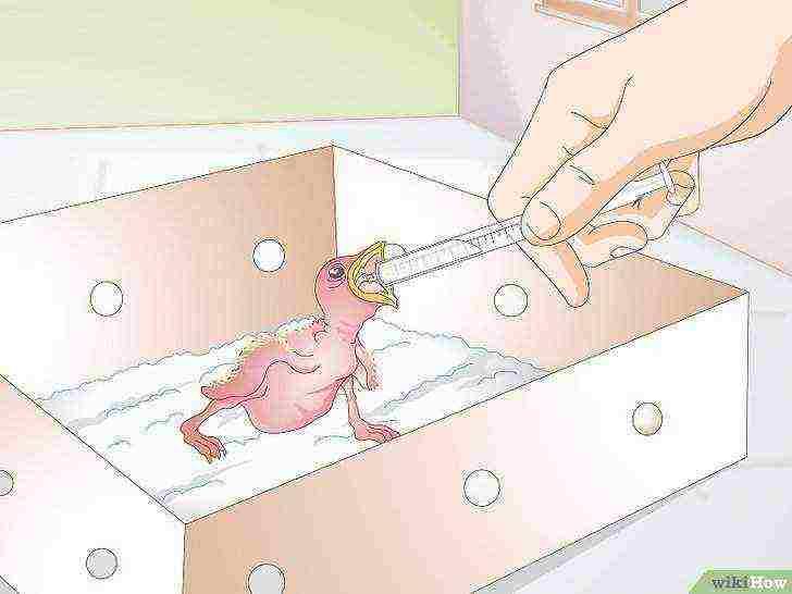 Чем болеют утки: перечень основных заболеваний