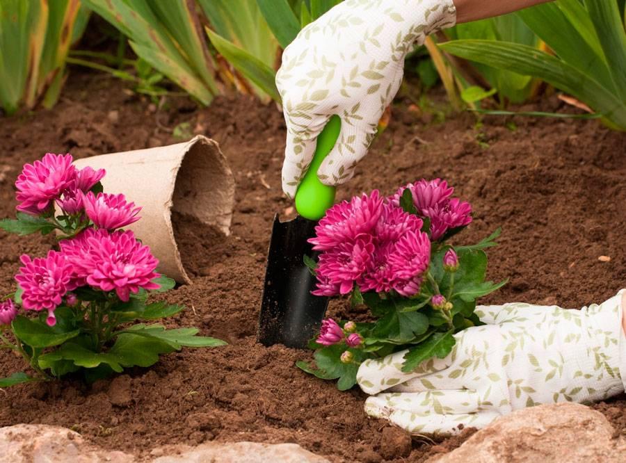 Почему не цветет каланхоэ в домашних условиях