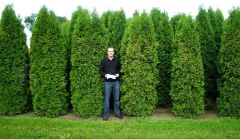 Уход, особенности выращивания туи сорта колумна