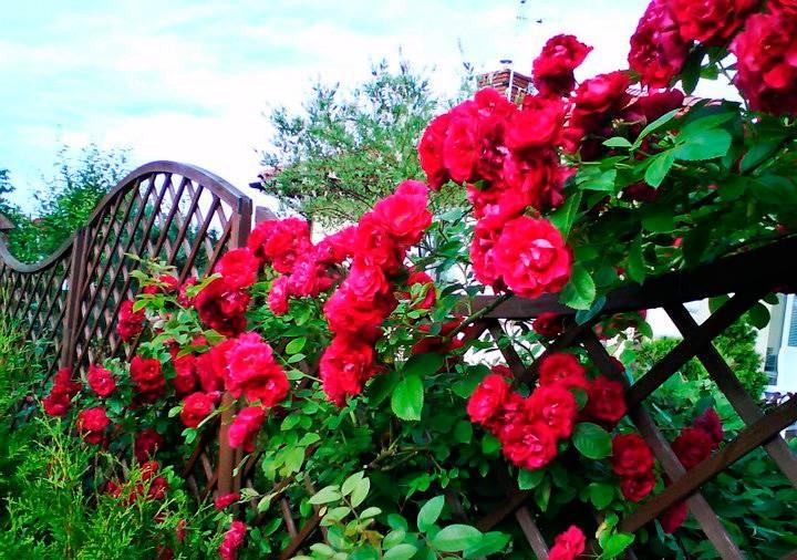 Многолетники для урала и сибири: подборка цветов с их фото