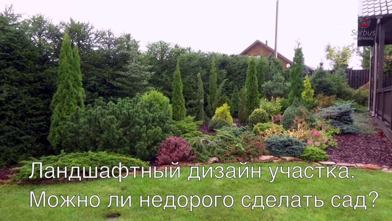 Ленивый сад: 20 многолетников для рационального садовода