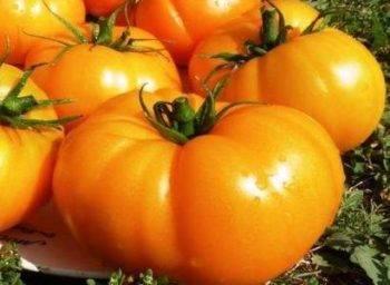 Характеристика и описание томата «сахарный бизон»