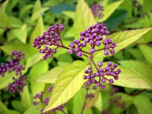 Какие кустарники можно высадить в тенистых уголках вашего сада