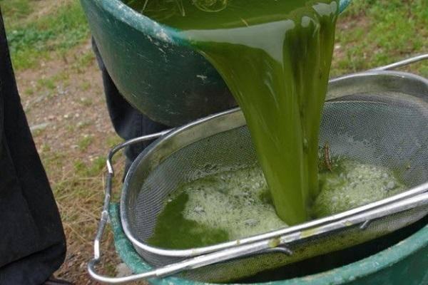 Жидкое удобрение из сорняков с дрожжами: как приготовить?