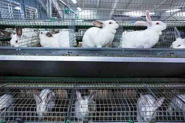 Рентабельность кролиководства: особенности и перспективы разведения кроликов