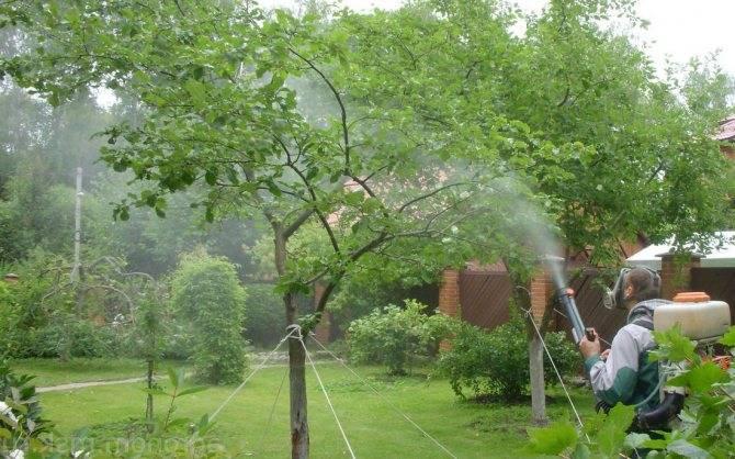 Что делать на даче в ноябре: план работ в саду и огороде