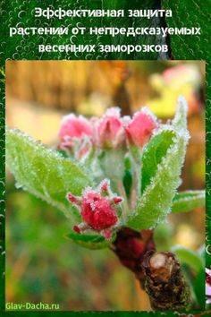 Защита от весенних заморозков садовых растений, деревьев, овощей