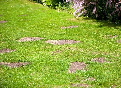 Как избавиться от мха на газоне: советы опытных садоводов