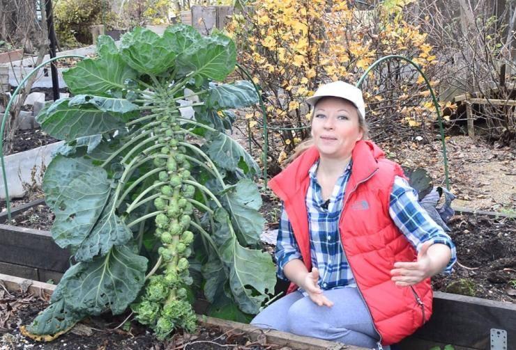 Секреты выращивания брюссельской капусты