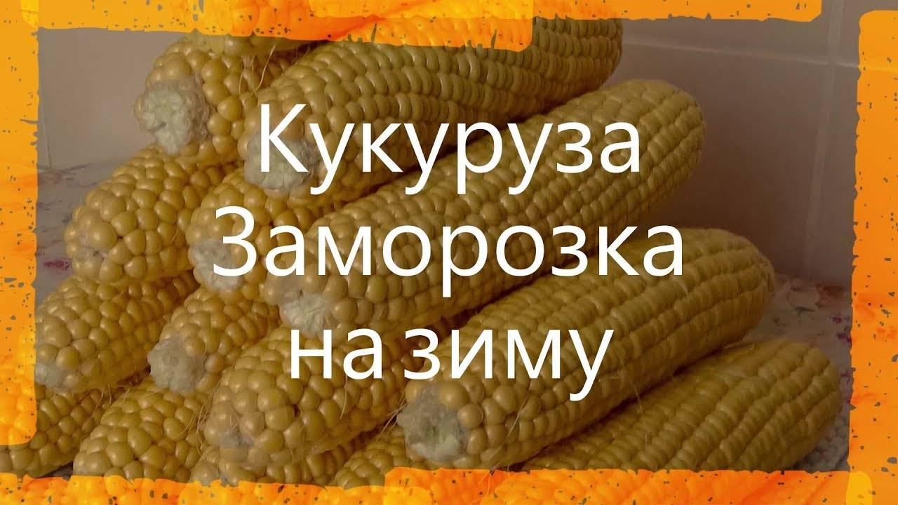 Кукуруза в початках на зиму