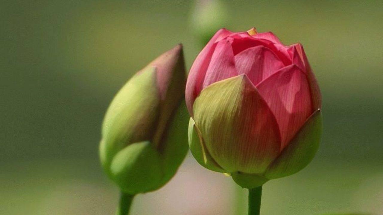 Препарат для цветения растений «цветень»: сделайте богатым свой урожай
