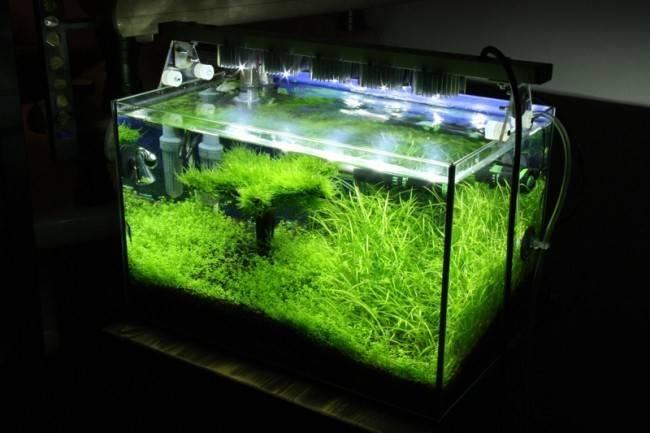 Лампы для аквариума и все ,что нужно о них знать.