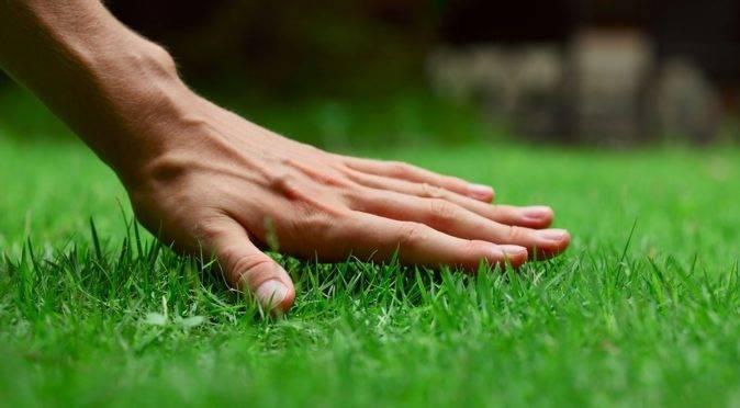 Газон после зимы: как бороться с вымерзанием газонных трав
