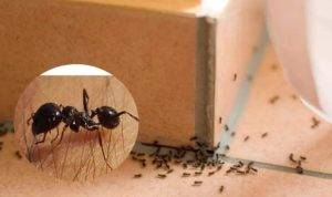 30 лучших способов для борьбы с муравьями в саду и огороде